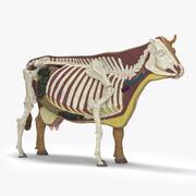 牛の解剖学 3d model