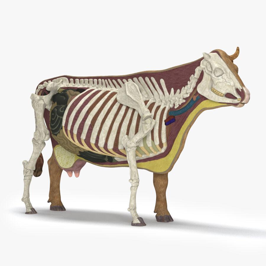 Anatomie de la vache royalty-free 3d model - Preview no. 1