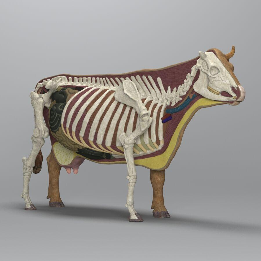 Anatomie de la vache royalty-free 3d model - Preview no. 2