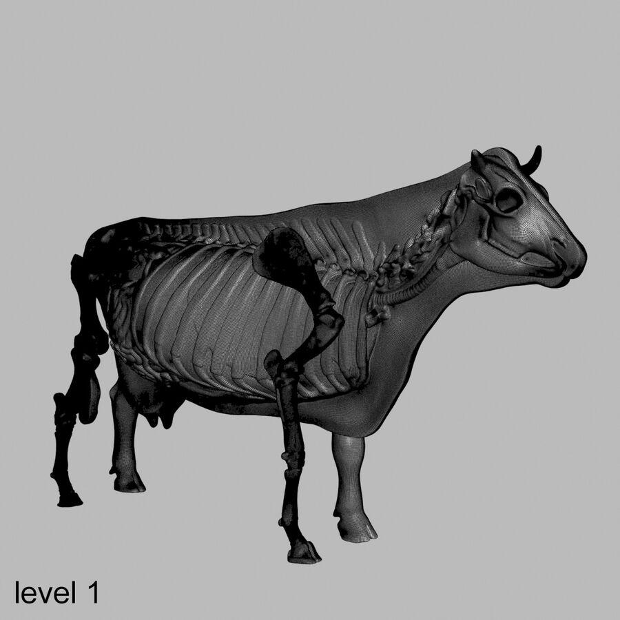 Anatomie de la vache royalty-free 3d model - Preview no. 38