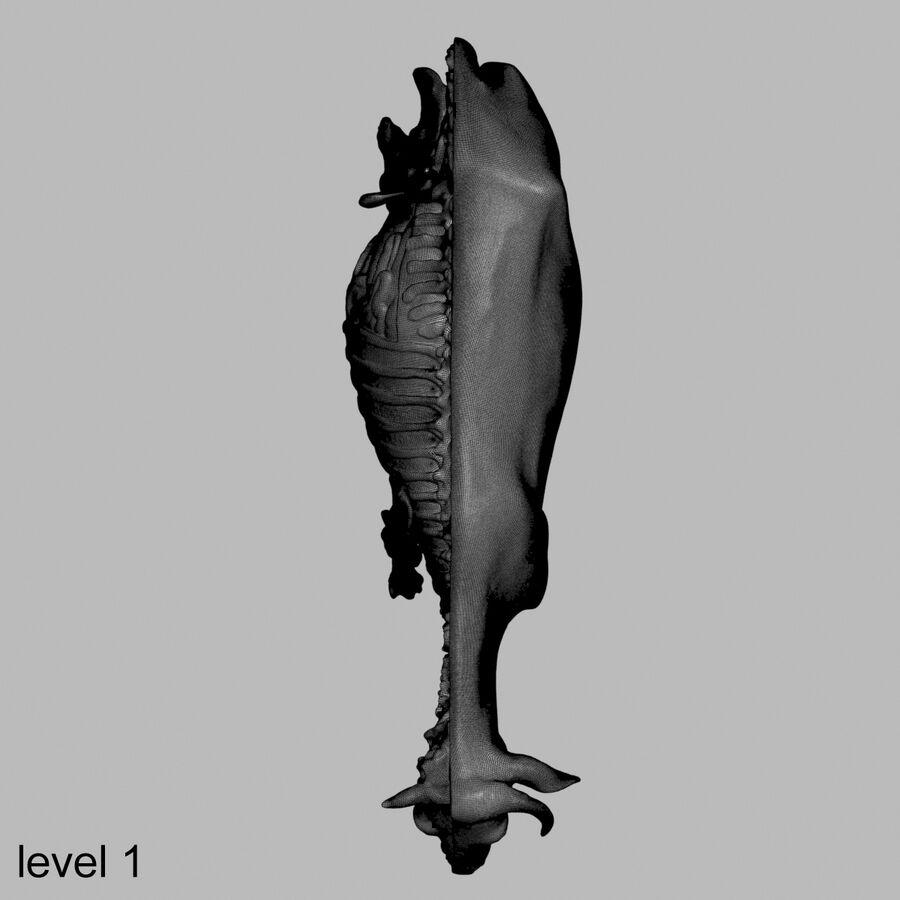 Anatomie de la vache royalty-free 3d model - Preview no. 42