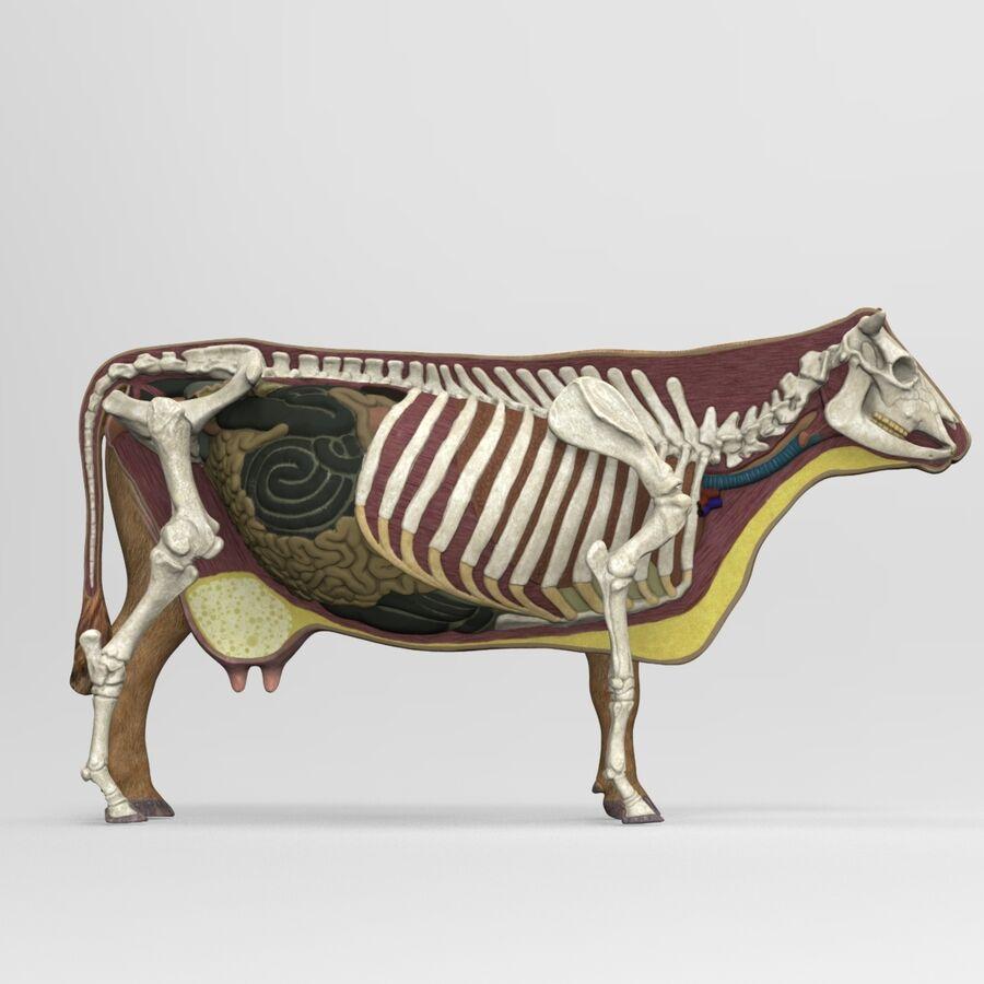 Anatomie de la vache royalty-free 3d model - Preview no. 12
