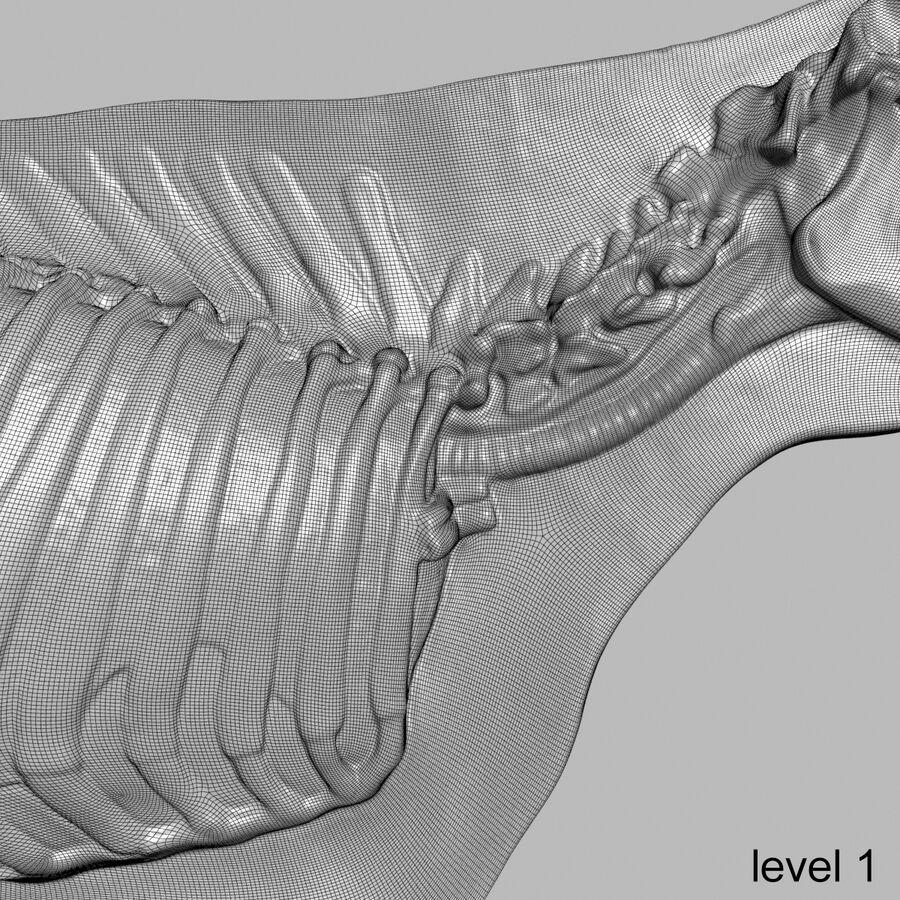 Anatomie de la vache royalty-free 3d model - Preview no. 40