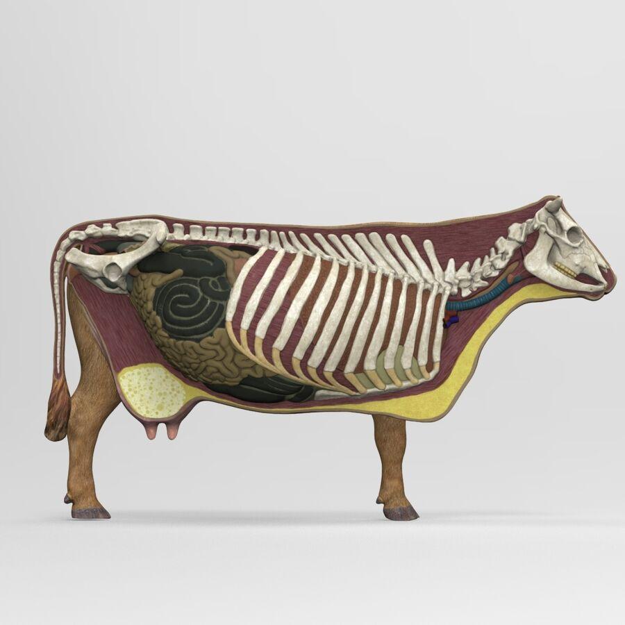 Anatomie de la vache royalty-free 3d model - Preview no. 13