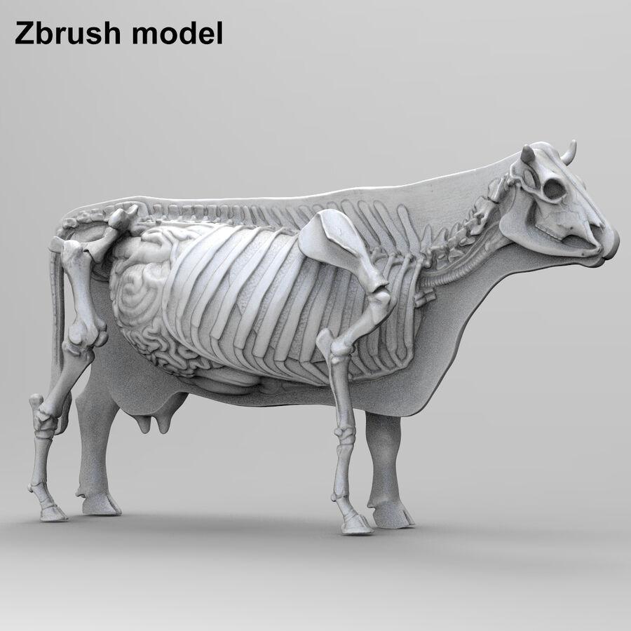 Anatomie de la vache royalty-free 3d model - Preview no. 23