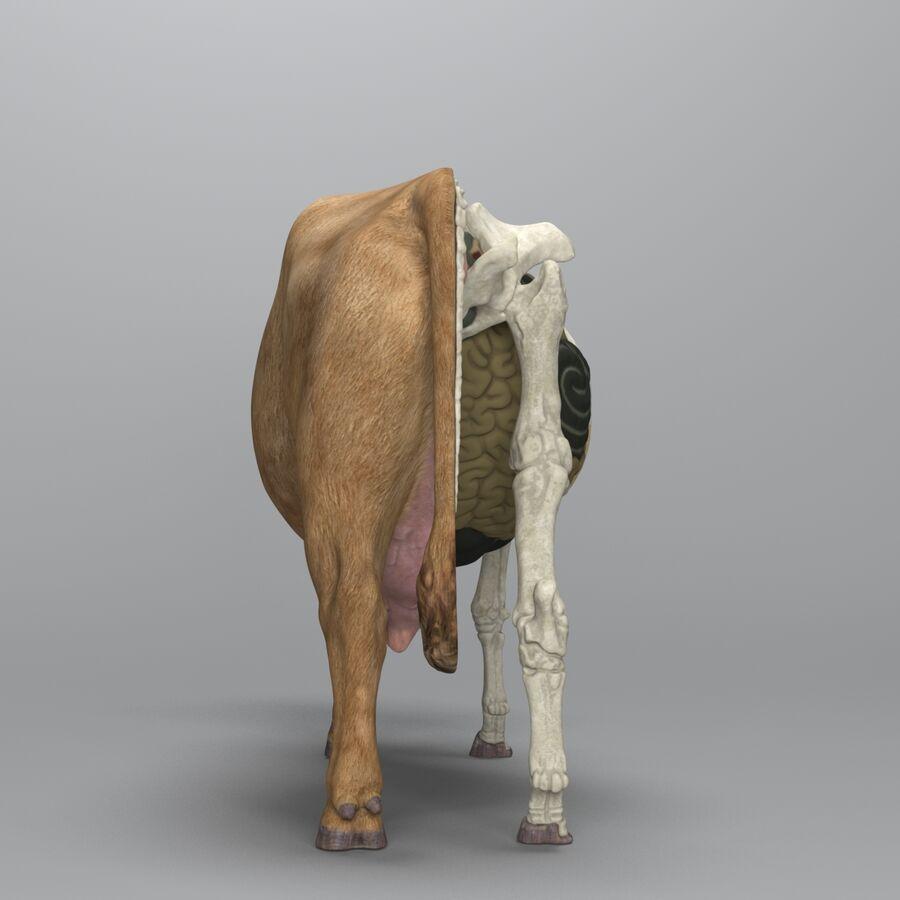 Anatomie de la vache royalty-free 3d model - Preview no. 6