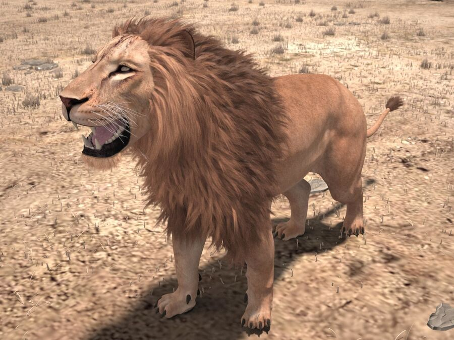 Lion The King Capelli testurizzati royalty-free 3d model - Preview no. 2