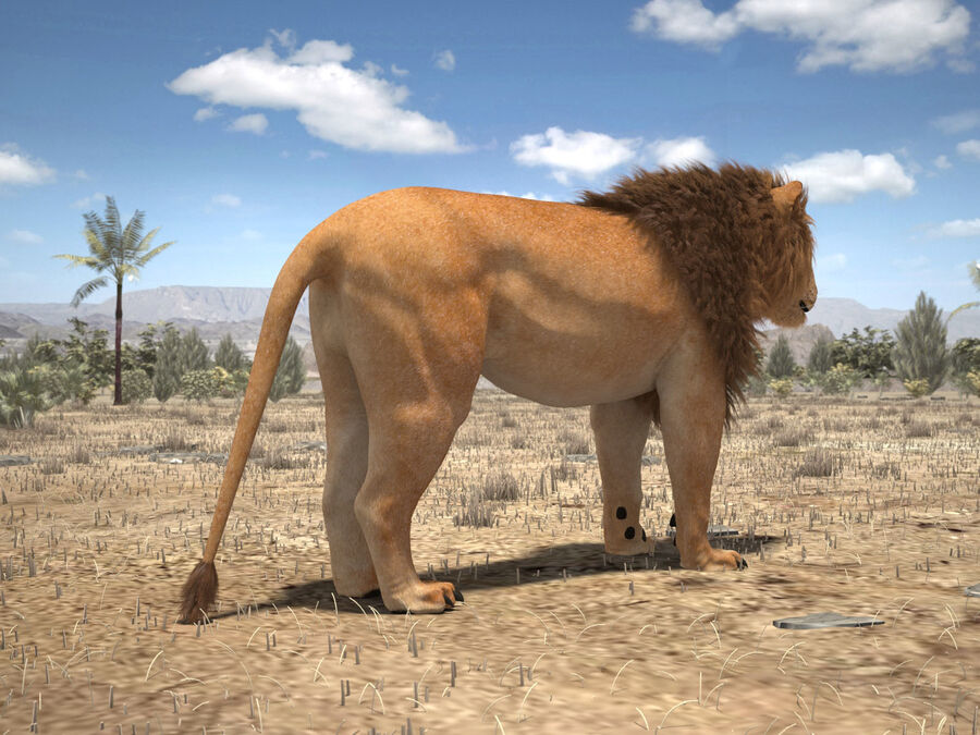 Lion The King Capelli testurizzati royalty-free 3d model - Preview no. 8