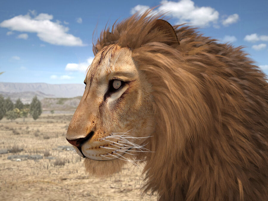 Lion The King Capelli testurizzati royalty-free 3d model - Preview no. 7