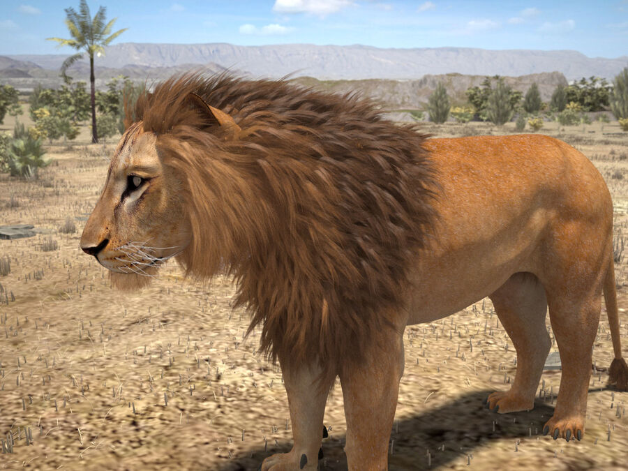 Lion The King Capelli testurizzati royalty-free 3d model - Preview no. 5