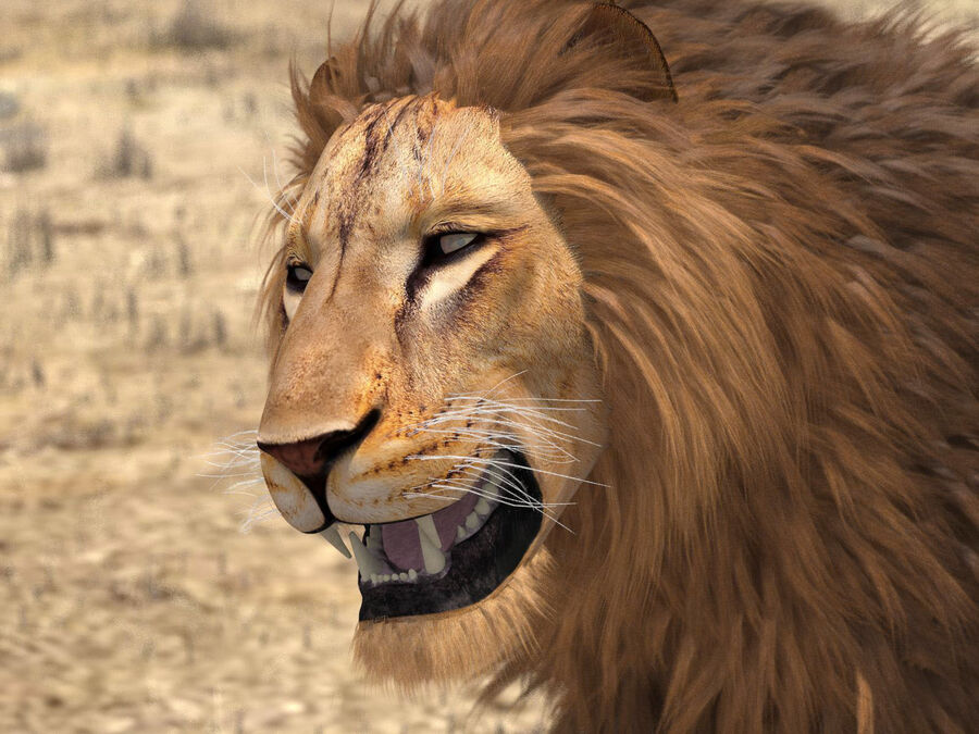 Lion The King Capelli testurizzati royalty-free 3d model - Preview no. 4