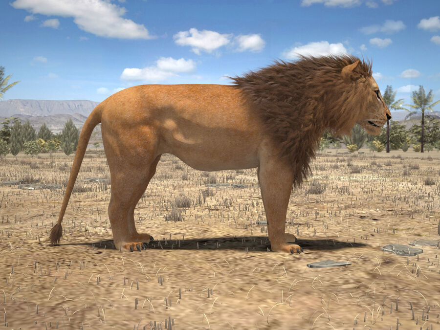 Lion The King Capelli testurizzati royalty-free 3d model - Preview no. 11