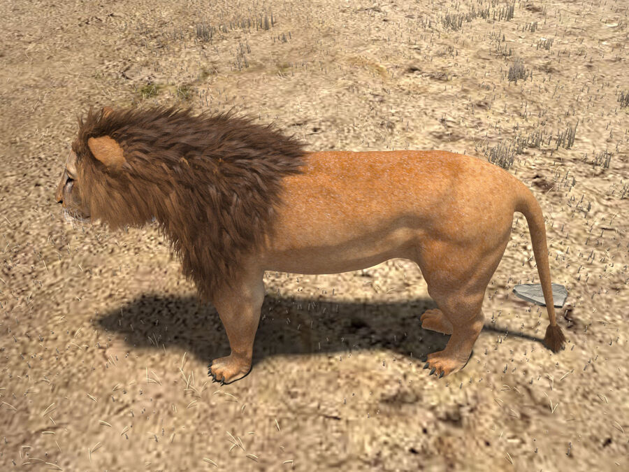 Lion The King Capelli testurizzati royalty-free 3d model - Preview no. 6