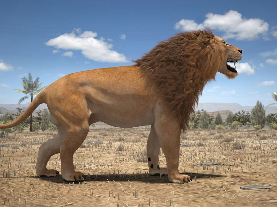 Lion The King Capelli testurizzati royalty-free 3d model - Preview no. 21