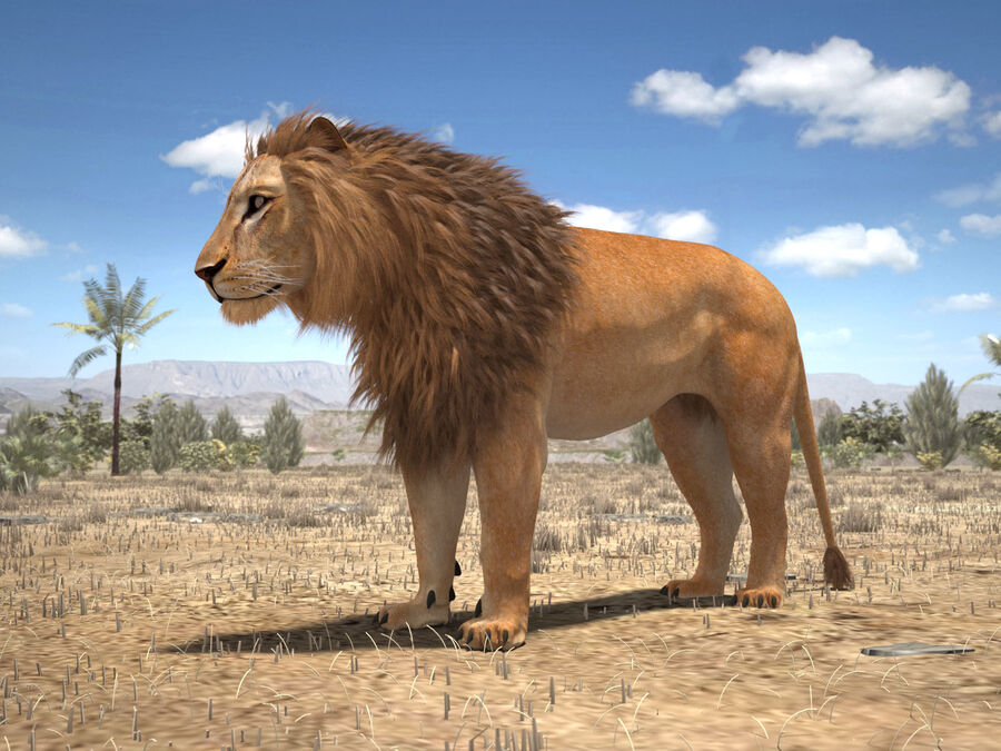 Lion The King Capelli testurizzati royalty-free 3d model - Preview no. 3