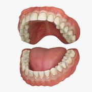 经典人类牙齿 3d model