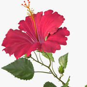 hibiscus red 3d model