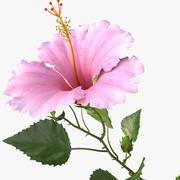 hibiscus pink 3d model