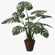 monstera plant_v4 3d model