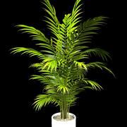 areca palm 160 cm. 3d model