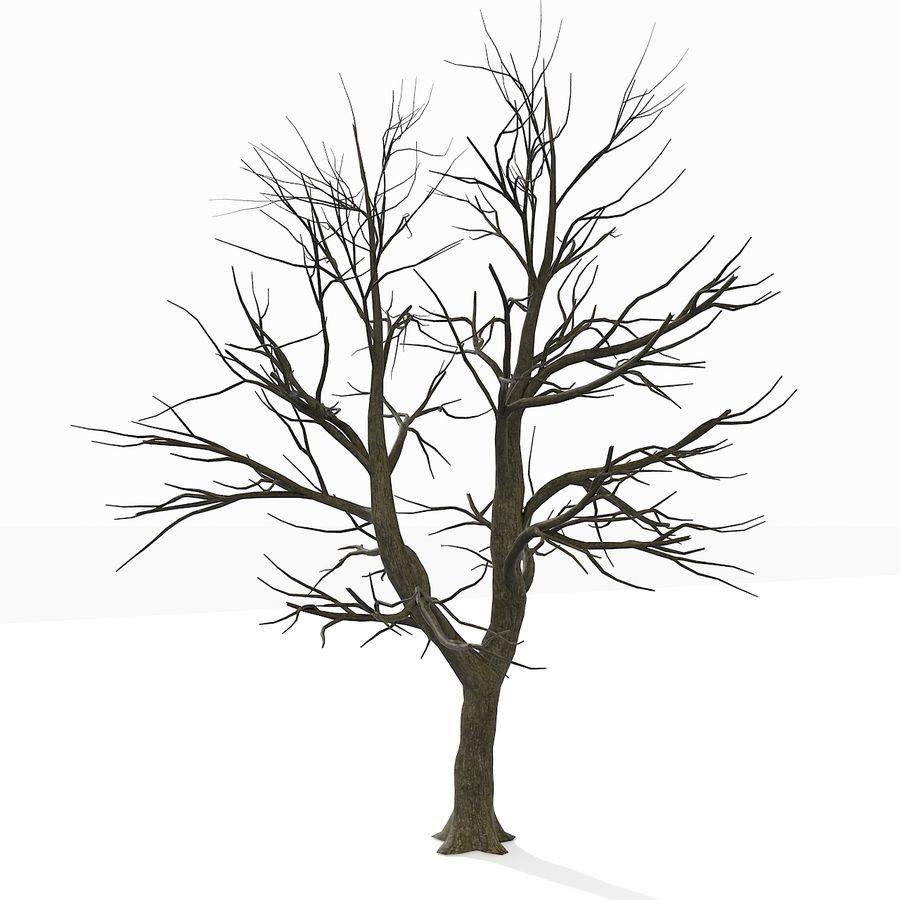 裸の葉のない秋の木 royalty-free 3d model - Preview no. 15