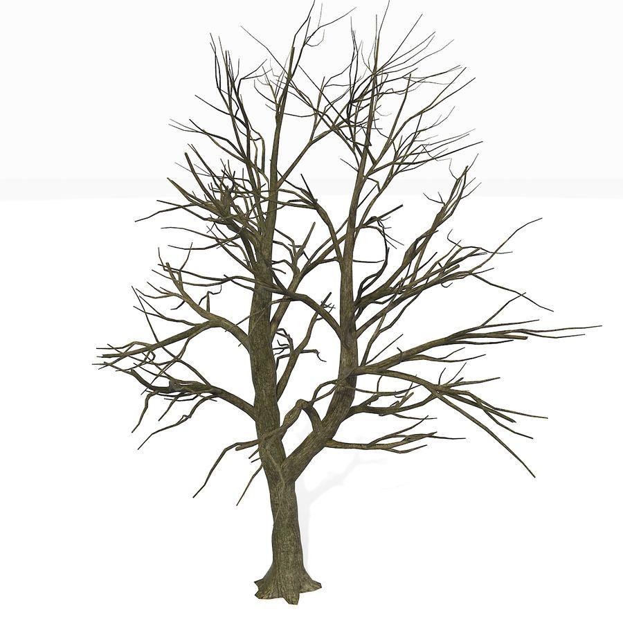 裸の葉のない秋の木 royalty-free 3d model - Preview no. 4