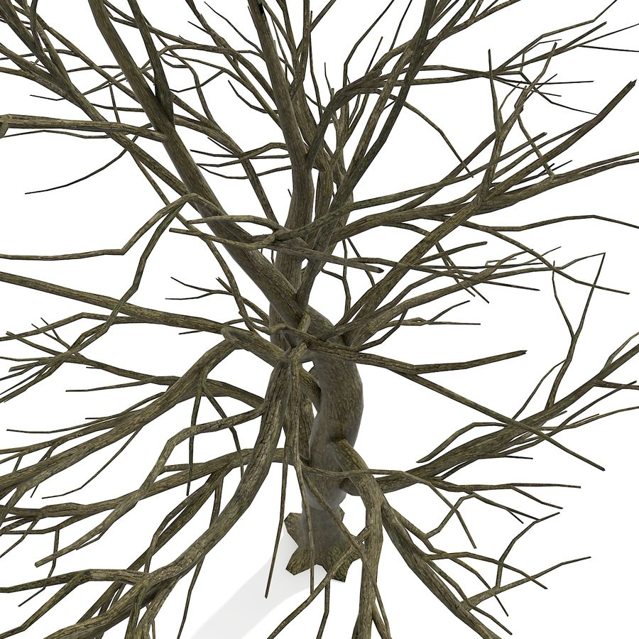 裸の葉のない秋の木 royalty-free 3d model - Preview no. 14