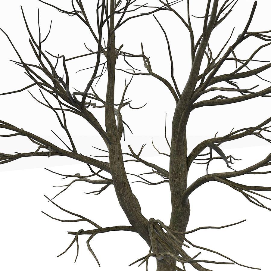 裸の葉のない秋の木 royalty-free 3d model - Preview no. 11