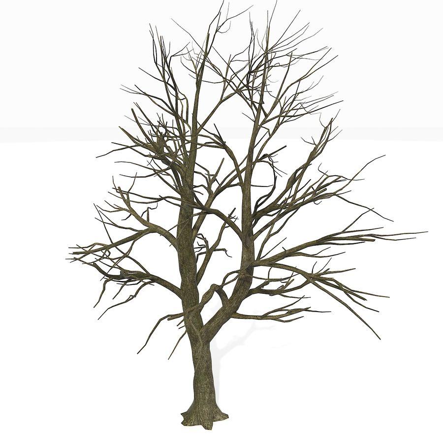 裸の葉のない秋の木 royalty-free 3d model - Preview no. 2