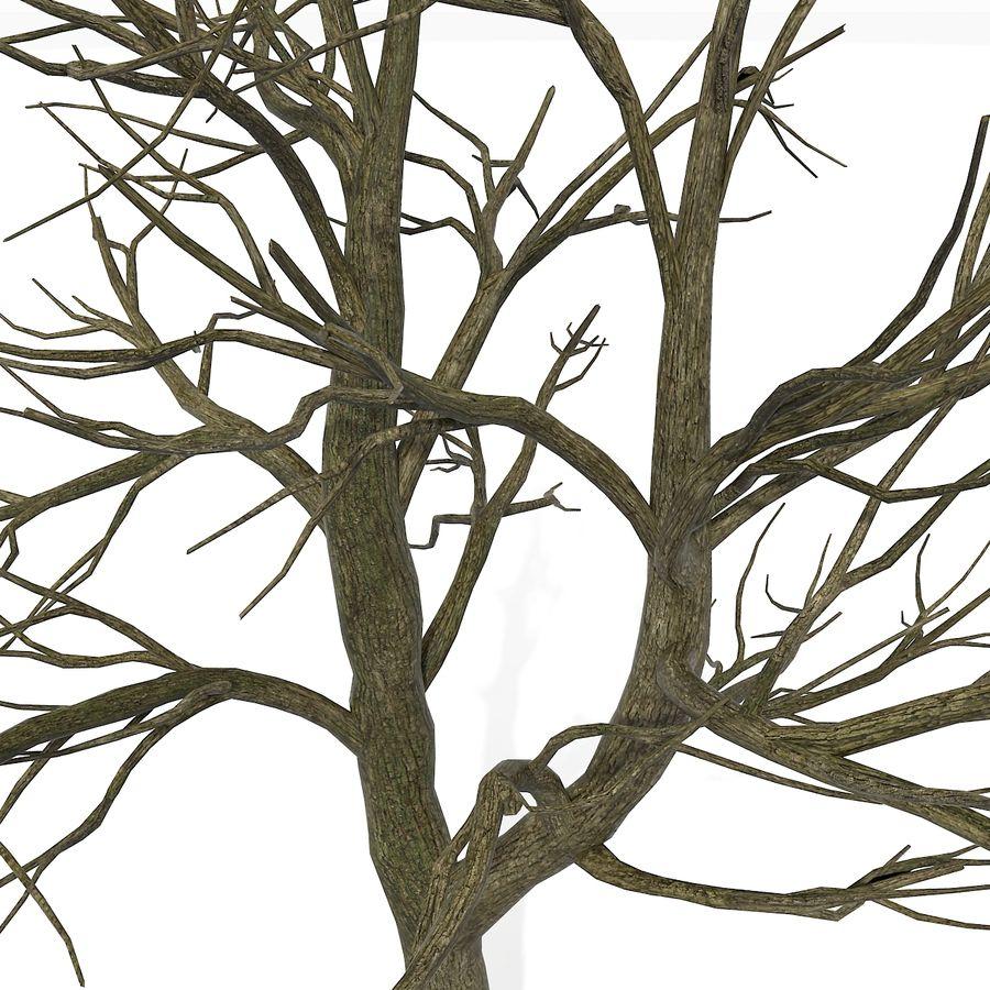 裸の葉のない秋の木 royalty-free 3d model - Preview no. 12