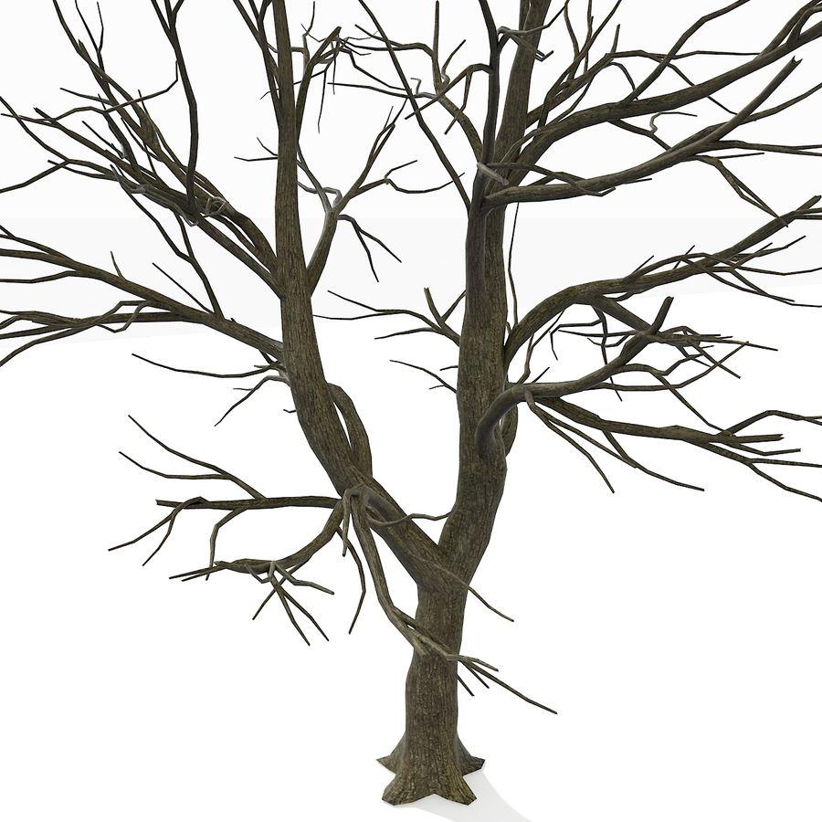 裸の葉のない秋の木 royalty-free 3d model - Preview no. 8