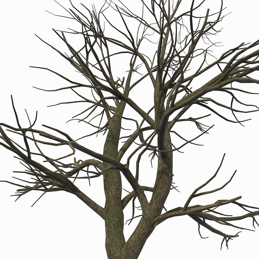 裸の葉のない秋の木 royalty-free 3d model - Preview no. 10