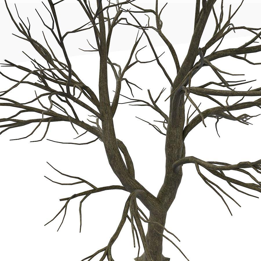 裸の葉のない秋の木 royalty-free 3d model - Preview no. 13