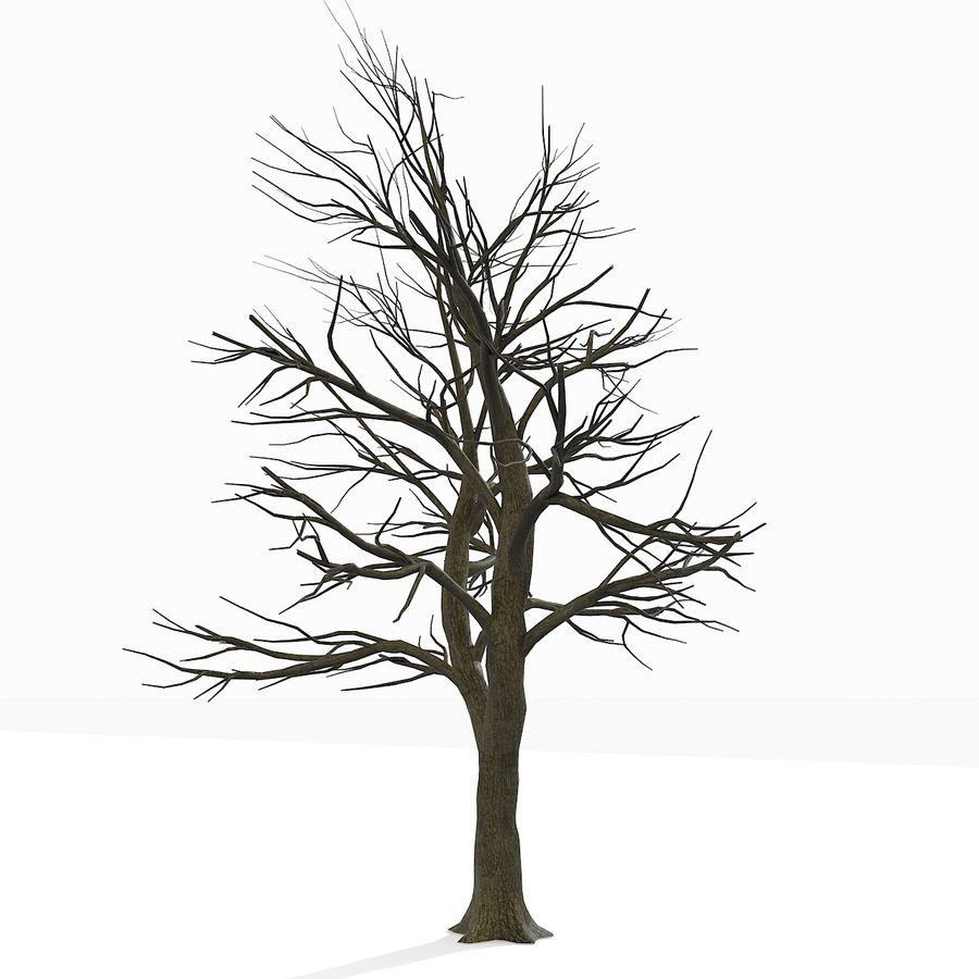 裸の葉のない秋の木 royalty-free 3d model - Preview no. 16