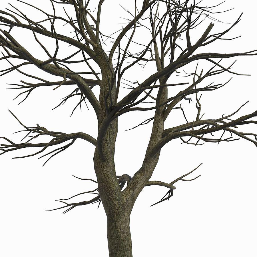 裸の葉のない秋の木 royalty-free 3d model - Preview no. 9