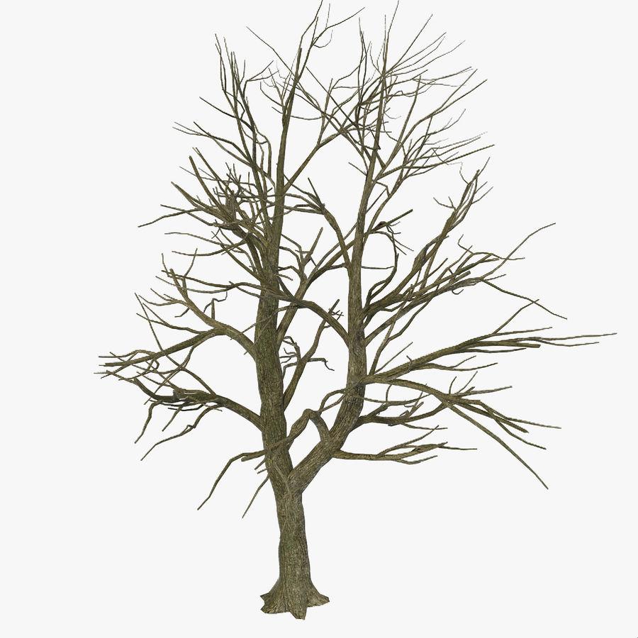 裸の葉のない秋の木 royalty-free 3d model - Preview no. 1
