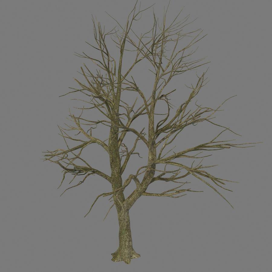 裸の葉のない秋の木 royalty-free 3d model - Preview no. 3