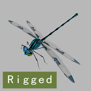 Dragonfly_Rigged 3d model