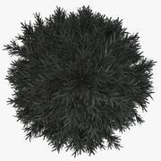 松树枞树 3d model