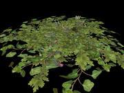 緑豊かなブッシュ 3d model