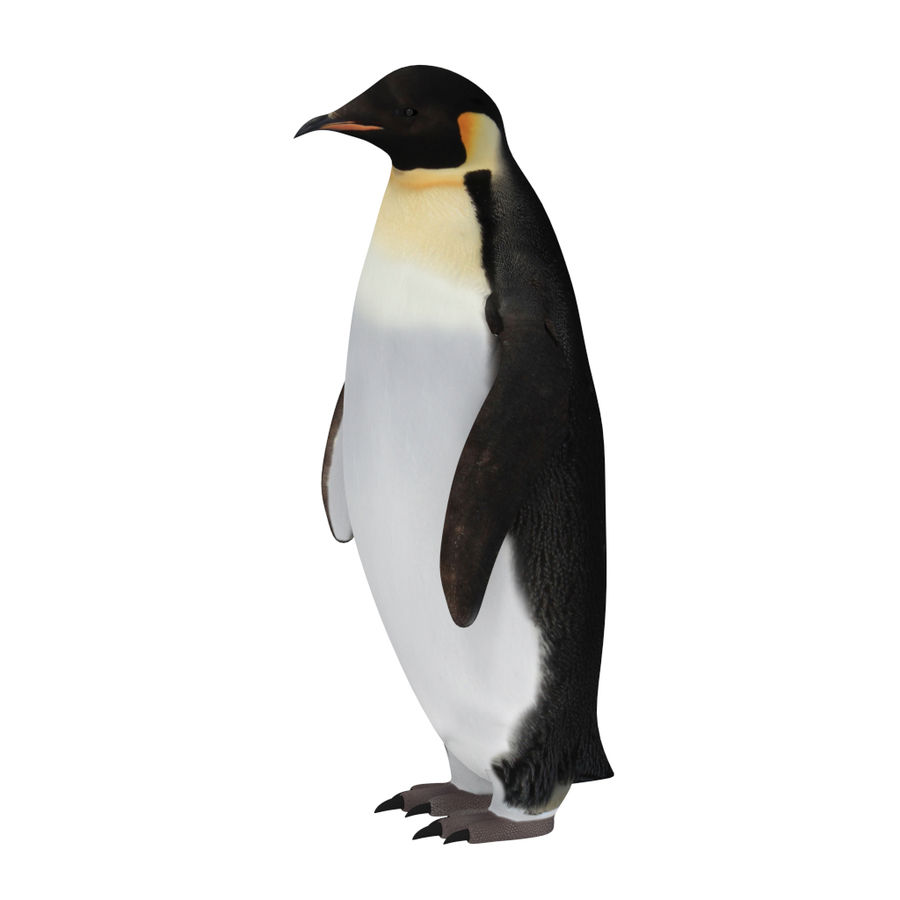 scène arctique royalty-free 3d model - Preview no. 16