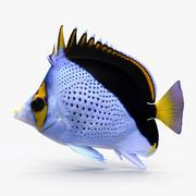Tinkeri Butterflyfish 3d model