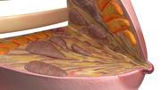 Anatomía del seno modelo 3d