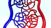 Arteries and Veins 3d model