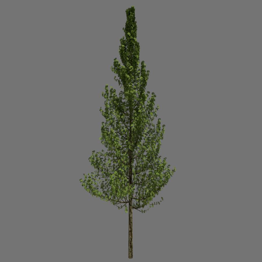 基本的なツリー royalty-free 3d model - Preview no. 1