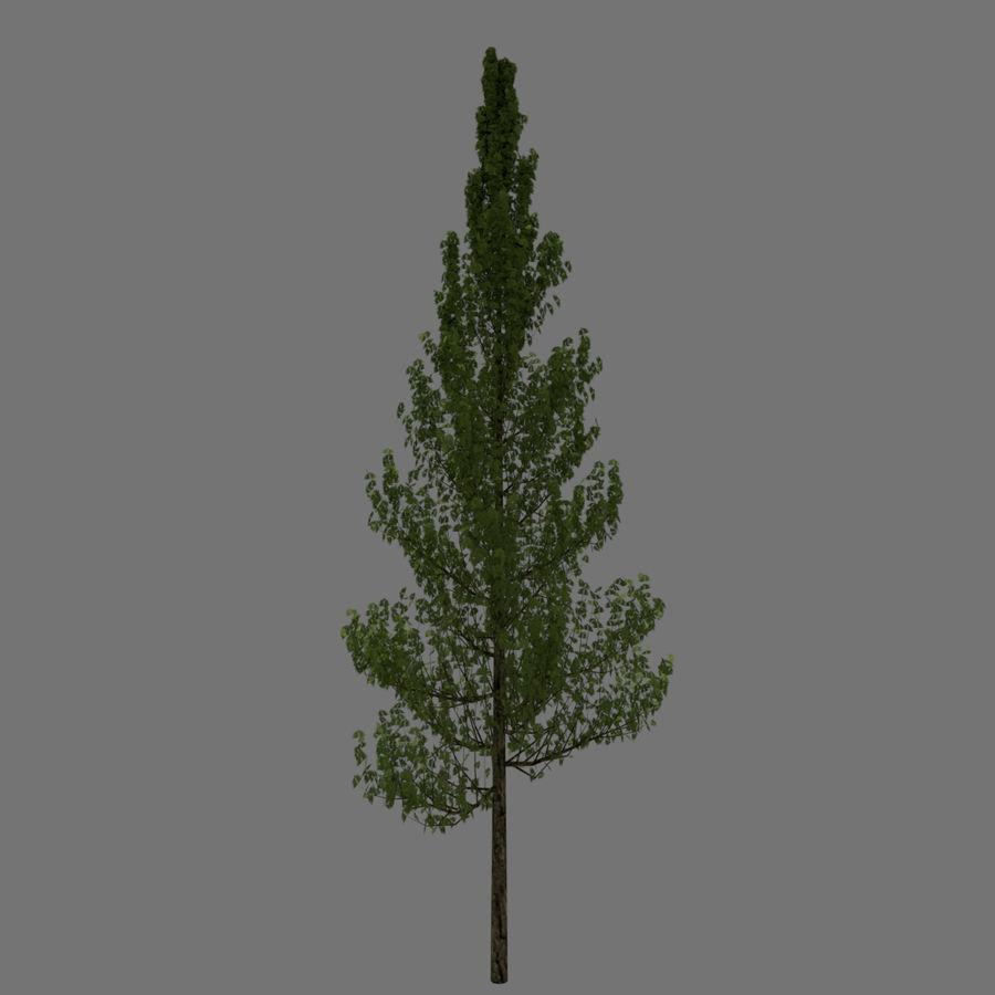 基本的なツリー royalty-free 3d model - Preview no. 3