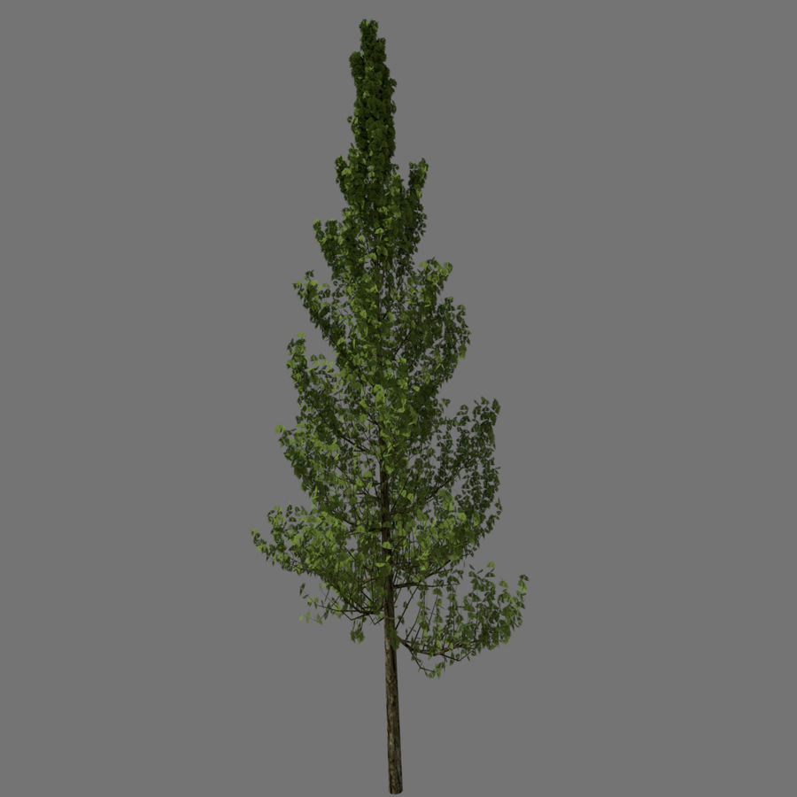 基本的なツリー royalty-free 3d model - Preview no. 2