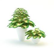 Rośliny 3d model