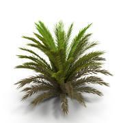 Fern bush 1 3d model