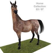 Realistic Horse 03 3d model